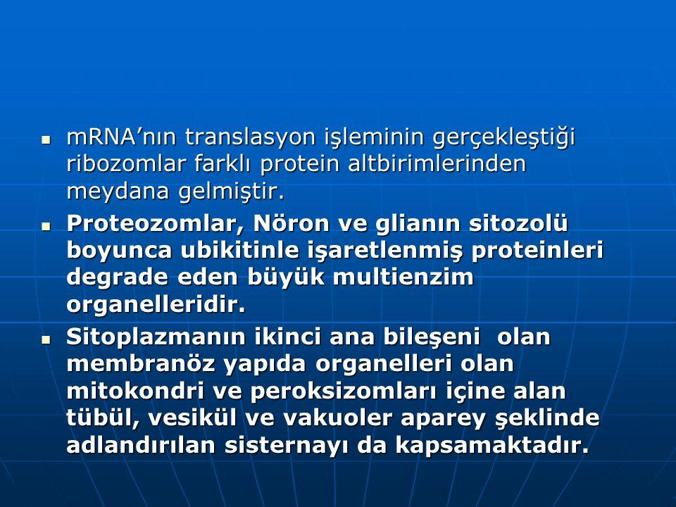 mRNA'nın translasyon işleminin gerçekleştiği ribozomlar farklı protein altbirimlerinden meydana gelmiştir. mRNA'nın translasyon işleminin gerçekleştiğ