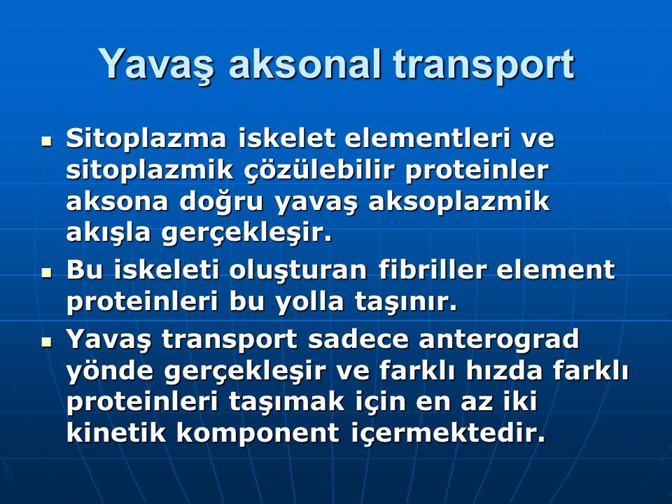 Yavaş aksonal transport Sitoplazma iskelet elementleri ve sitoplazmik çözülebilir proteinler aksona doğru yavaş aksoplazmik akışla gerçekleşir.