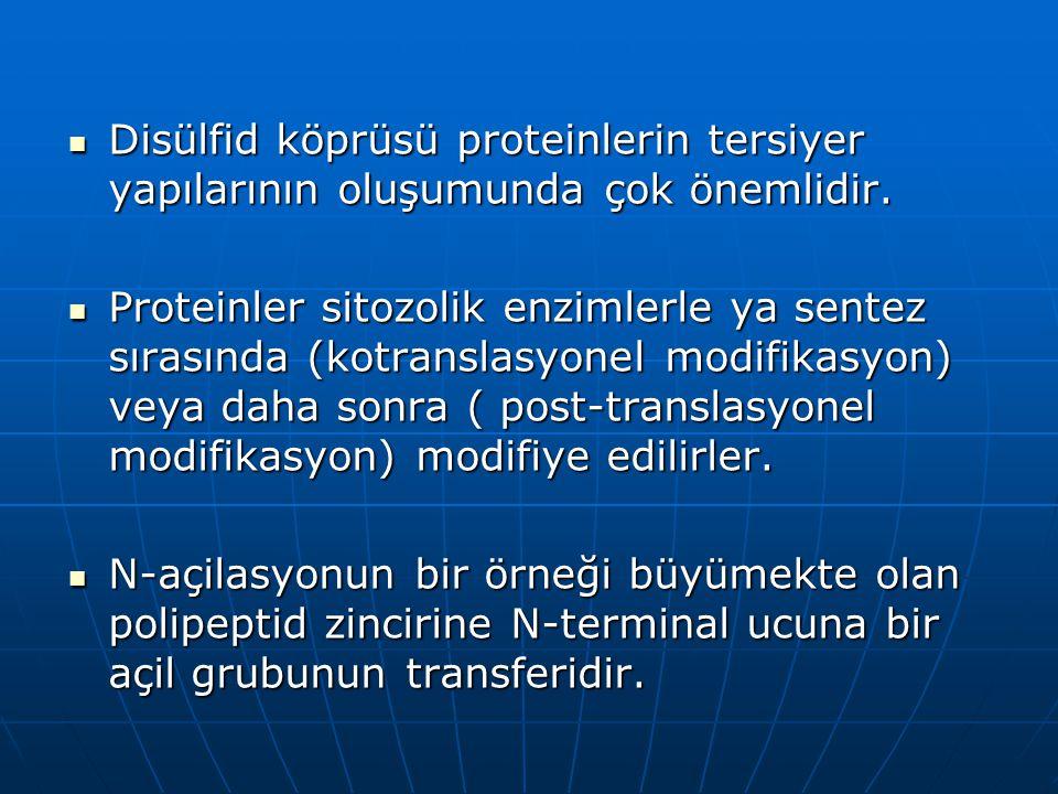 Disülfid köprüsü proteinlerin tersiyer yapılarının oluşumunda çok önemlidir.
