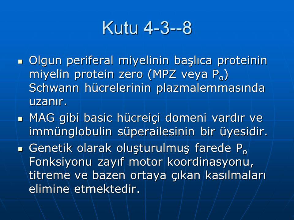 Kutu 4-3--8 Olgun periferal miyelinin başlıca proteinin miyelin protein zero (MPZ veya P o ) Schwann hücrelerinin plazmalemmasında uzanır. Olgun perif