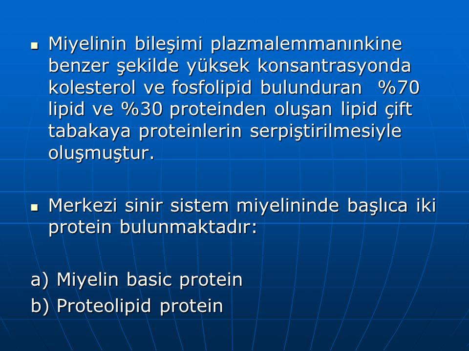 Miyelinin bileşimi plazmalemmanınkine benzer şekilde yüksek konsantrasyonda kolesterol ve fosfolipid bulunduran %70 lipid ve %30 proteinden oluşan lip