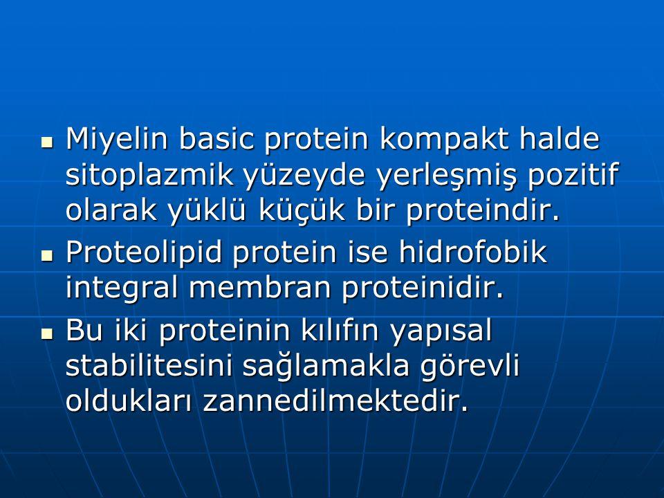 Miyelin basic protein kompakt halde sitoplazmik yüzeyde yerleşmiş pozitif olarak yüklü küçük bir proteindir. Miyelin basic protein kompakt halde sitop