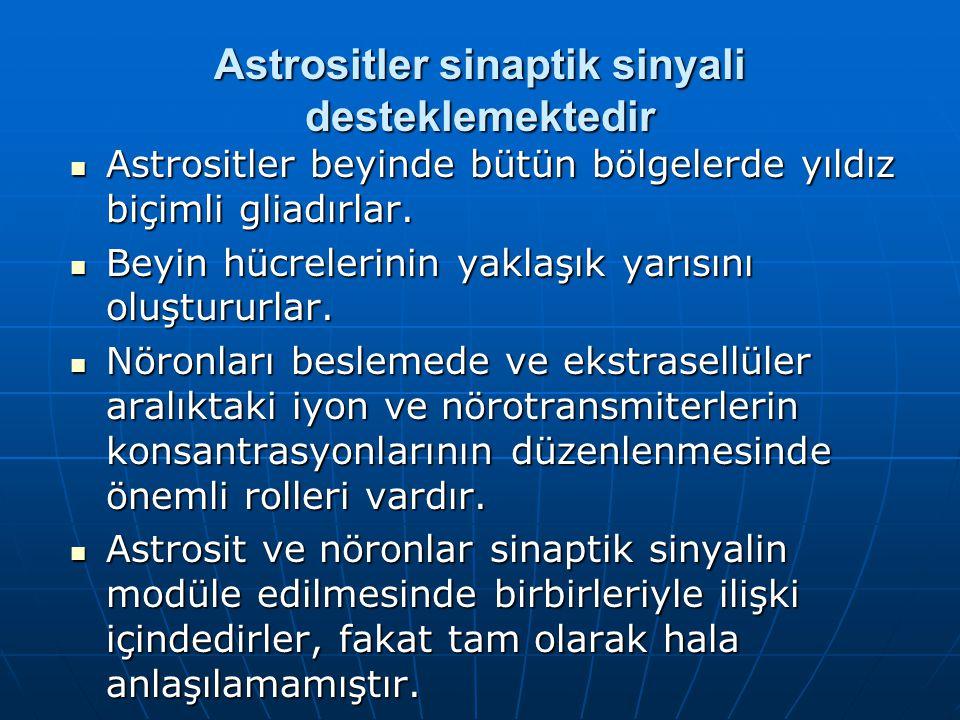 Astrositler sinaptik sinyali desteklemektedir Astrositler beyinde bütün bölgelerde yıldız biçimli gliadırlar.