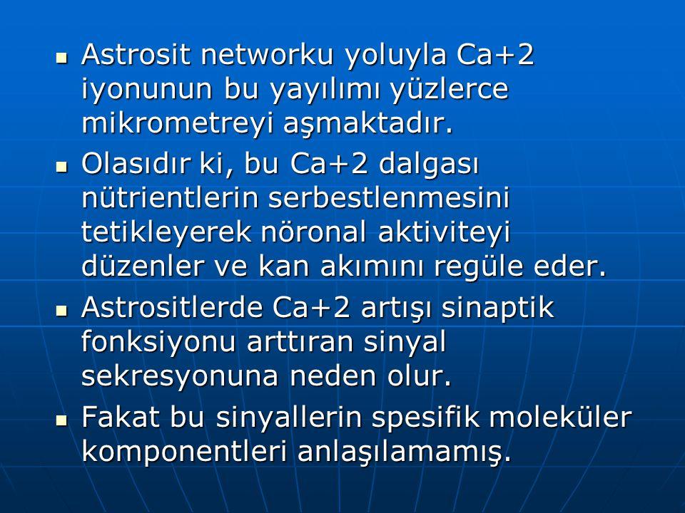 Astrosit networku yoluyla Ca+2 iyonunun bu yayılımı yüzlerce mikrometreyi aşmaktadır. Astrosit networku yoluyla Ca+2 iyonunun bu yayılımı yüzlerce mik