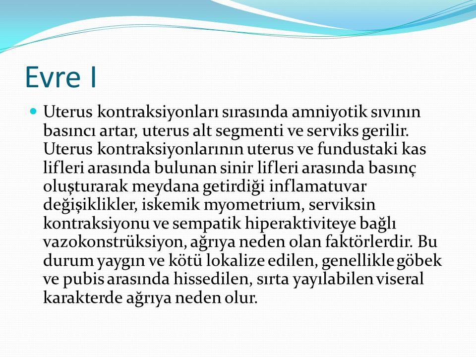 Evre I Uterus kontraksiyonları sırasında amniyotik sıvının basıncı artar, uterus alt segmenti ve serviks gerilir. Uterus kontraksiyonlarının uterus ve