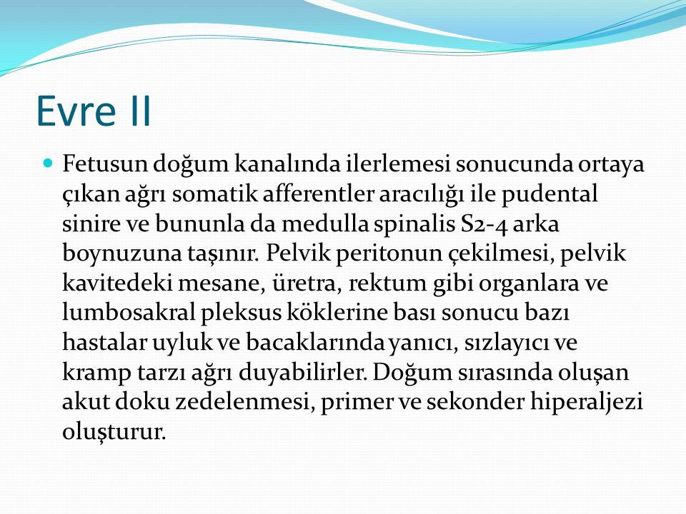 Evre II Fetusun doğum kanalında ilerlemesi sonucunda ortaya çıkan ağrı somatik afferentler aracılığı ile pudental sinire ve bununla da medulla spinali