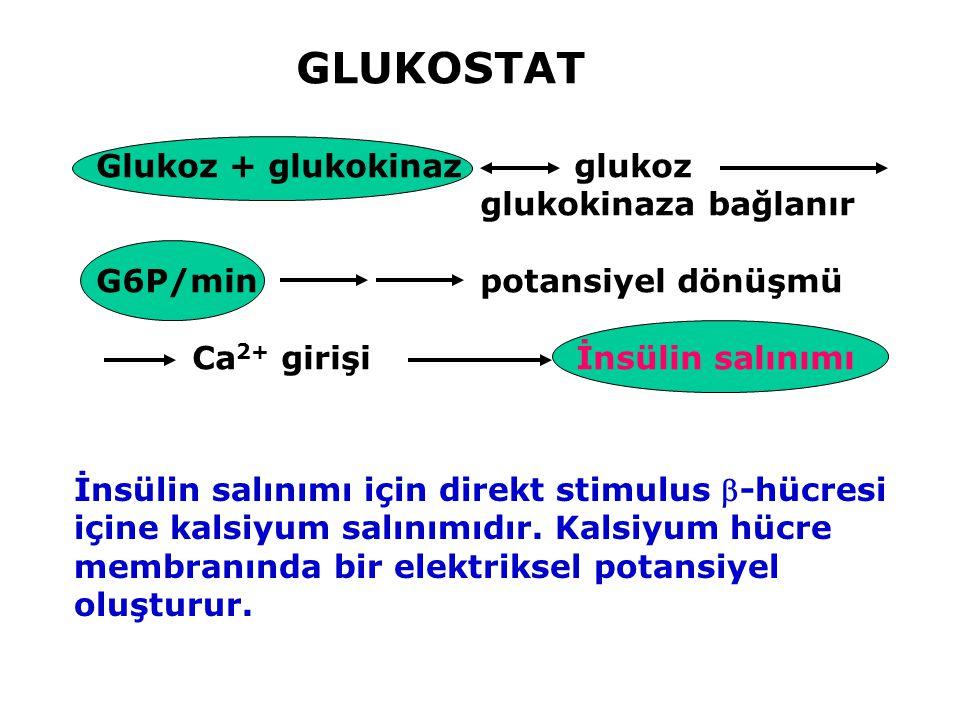 Glukoz + glukokinaz glukoz glukokinaza bağlanır G6P/min potansiyel dönüşmü Ca 2+ girişi İnsülin salınımı İnsülin salınımı için direkt stimulus -hücre