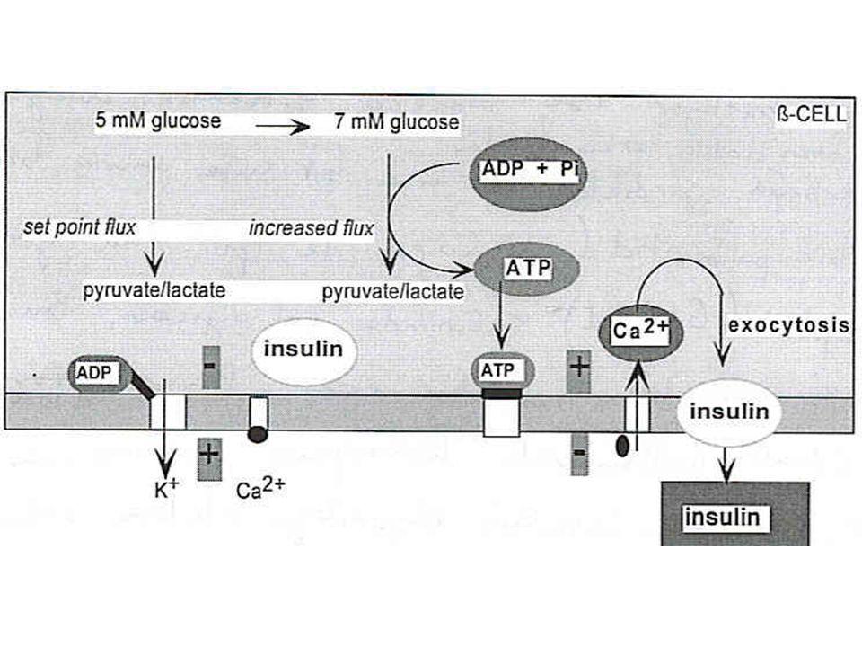 Glukagon-Like Peptid-1(GLP-1)  -hücresi cAMP GLP-1 Glukoz Barsak Ca 2+ İnsulin salınımı glukoz barsağa girdikten Kısa bir süre sonra başlar İnsulin salınımı