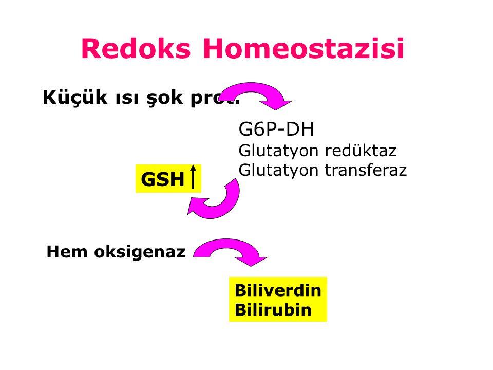 Redoks Homeostazisi Kükürt içeren amino asitler oksidasyona duyarlıdır.