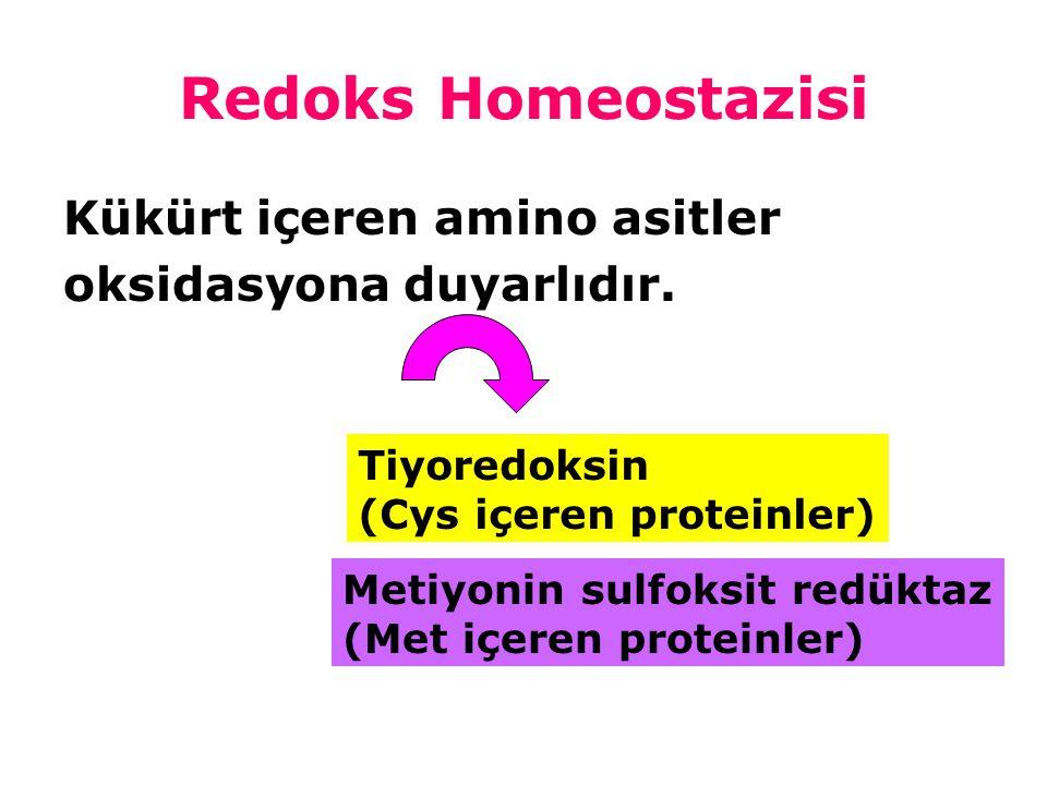 Redoks Homeostazisi Kükürt içeren amino asitler oksidasyona duyarlıdır. Tiyoredoksin (Cys içeren proteinler) Metiyonin sulfoksit redüktaz (Met içeren