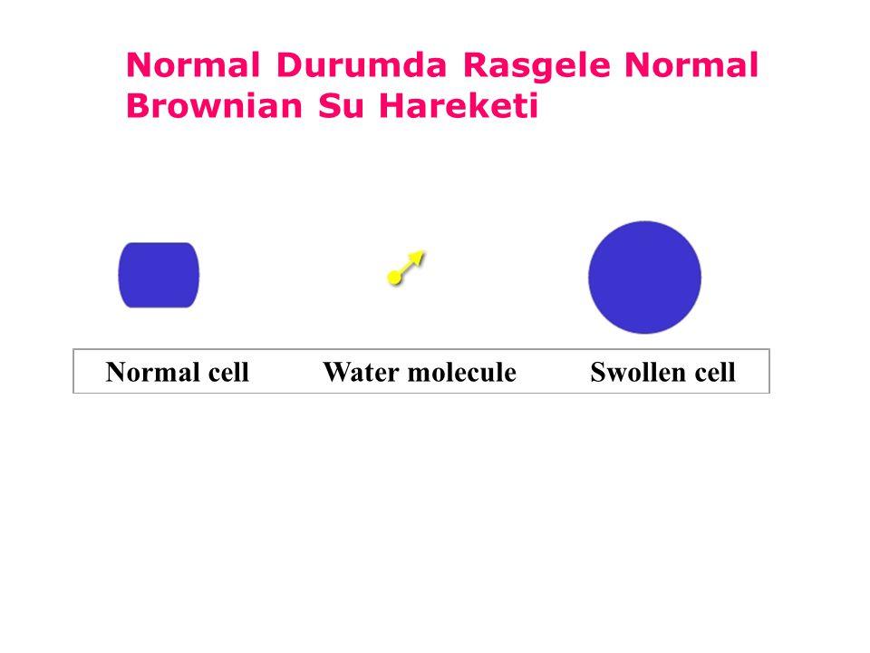 Hücrelerin şişmesine ve interstisyel kompartmanın büzüşmesine bağlı olarak su moleküllerinin sınırlı hareketi Laktat artışı ve hücreden hücre dışı sıvıya laktat geçişi Dönüşümsüz hasar yok.