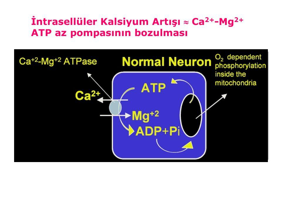 Dönüşümsüz hasarın başlangıç basamağı Hücre-içi Ca 2+ artışı lizozomal enzimlerin otolitik yıkılımı ile mitokondri, plazma ve diğer organel membranlarının yıkılması