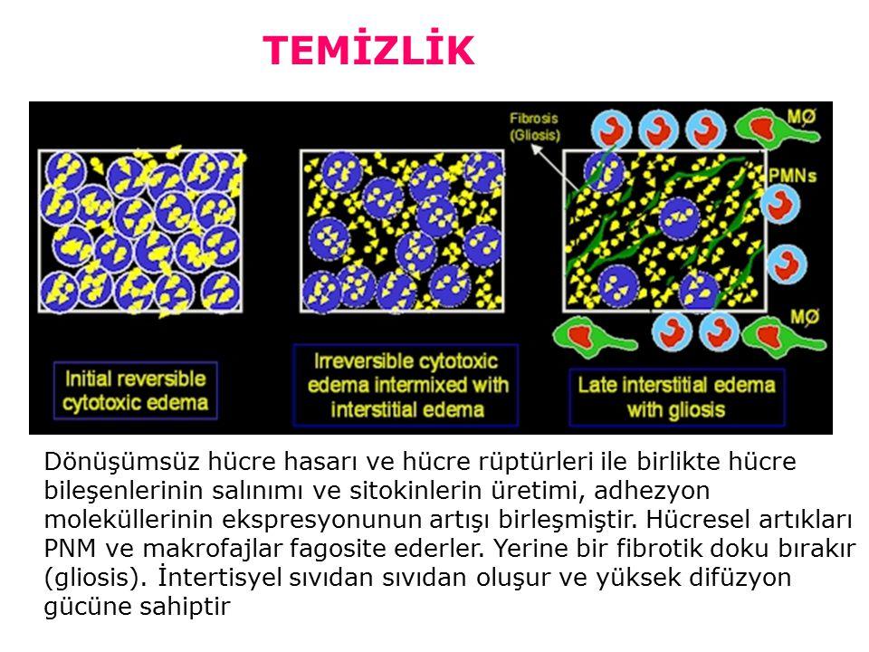 Dönüşümsüz hücre hasarı ve hücre rüptürleri ile birlikte hücre bileşenlerinin salınımı ve sitokinlerin üretimi, adhezyon moleküllerinin ekspresyonunun