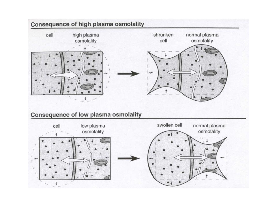 Hücre içi ozmolarite nasıl düzenlenir.