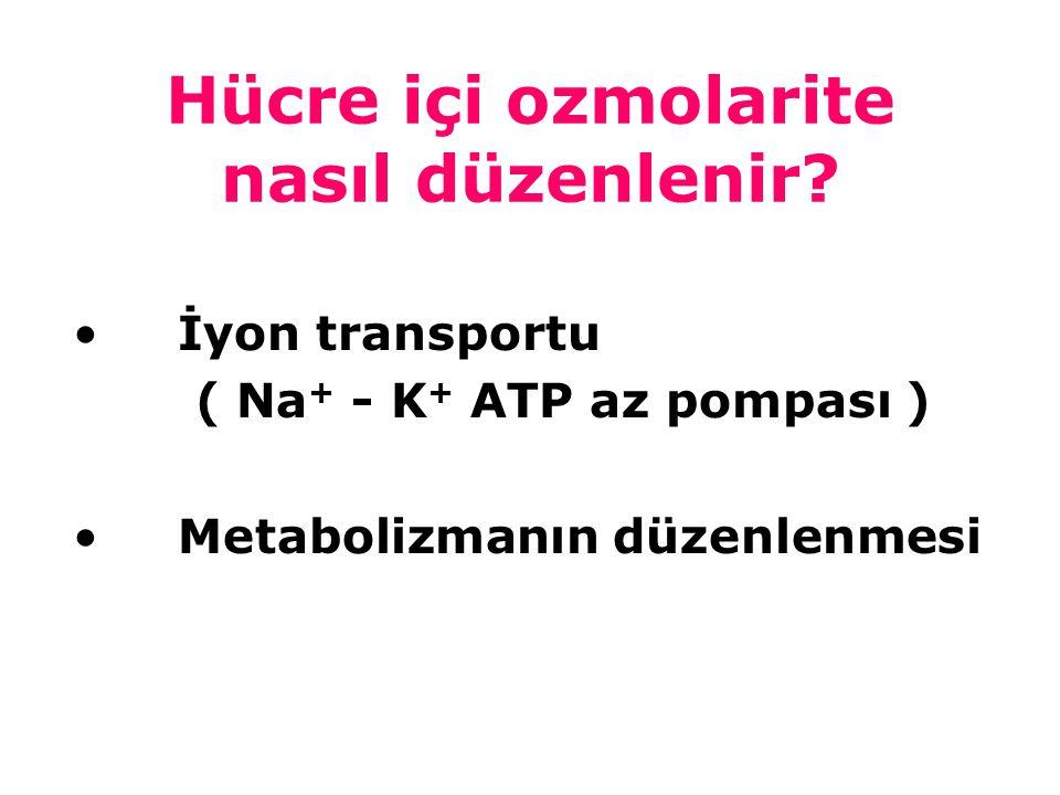 Hücre içi ozmolarite nasıl düzenlenir? İyon transportu ( Na + - K + ATP az pompası ) Metabolizmanın düzenlenmesi