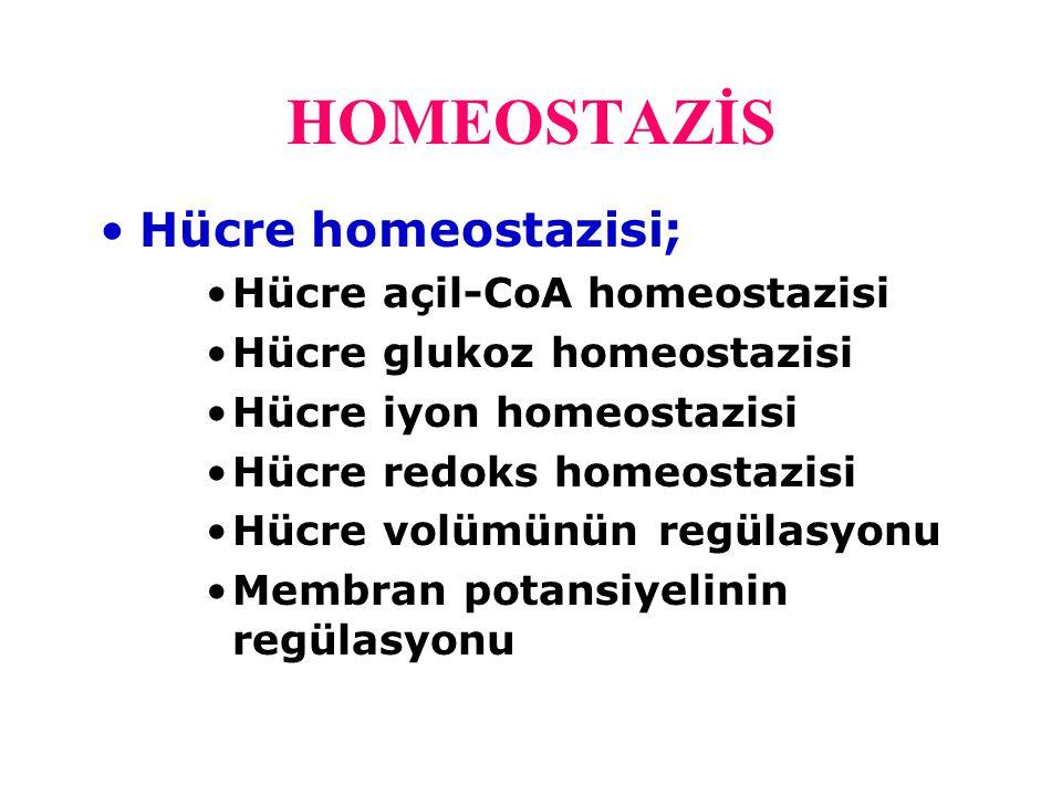 Açil-CoA homeostazisi Kolesterol homeostazisi için önemlidir.