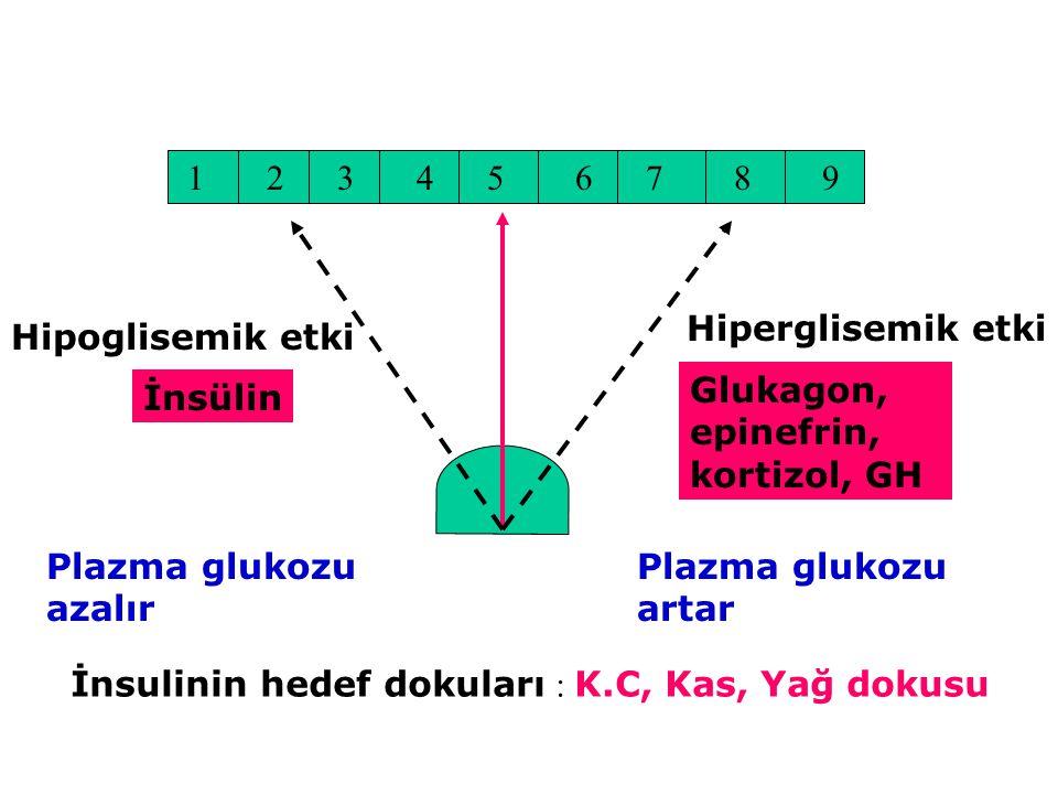 123456789 Hiperglisemik etki Hipoglisemik etki İnsülin Glukagon, epinefrin, kortizol, GH Plazma glukozu azalır Plazma glukozu artar İnsulinin hedef do