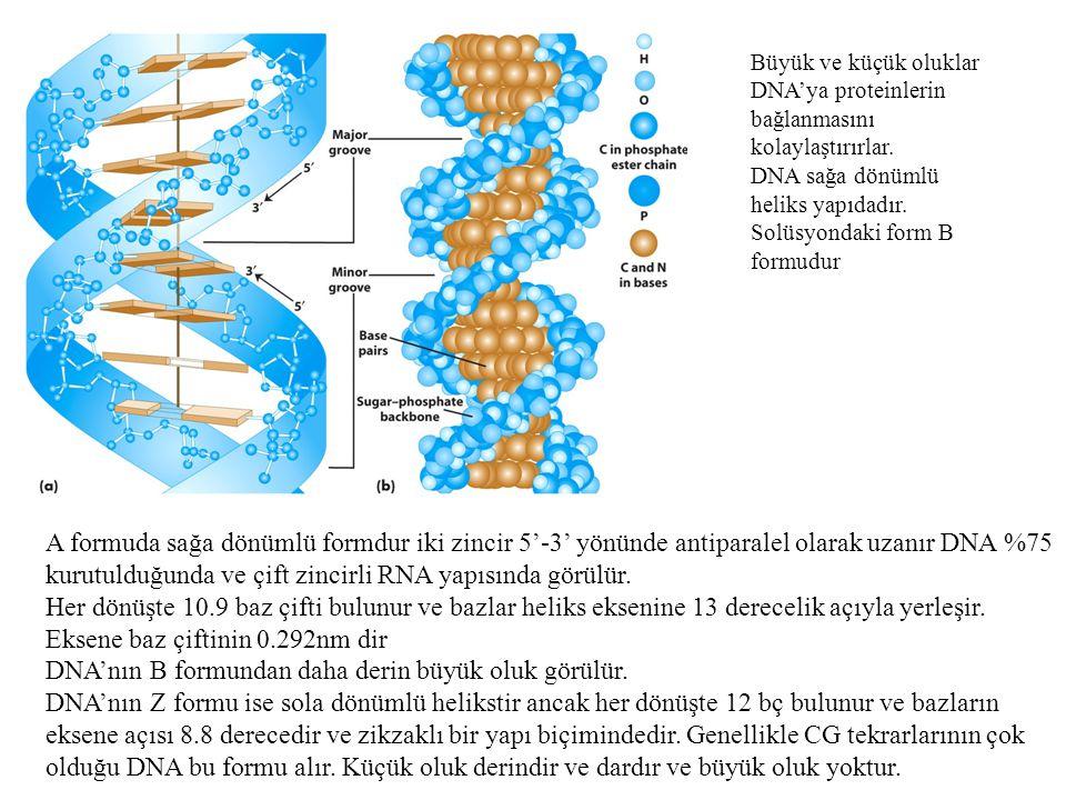 DNA yapısında baz eşleşmesi.