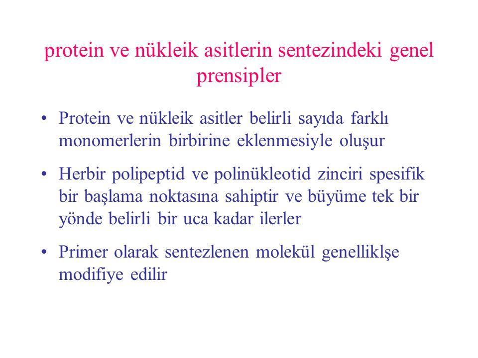 Zincirlerin uzaması hem proteinlerde hemde nükleik asitlerde monomerik birimlerin birer birer eklenmesiyle gerçekleşir