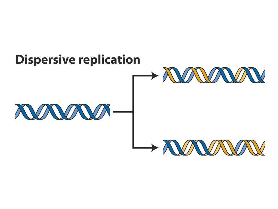 Meselson-Stahl Deneyi.DNA replikasyonu semikonservatiftir.