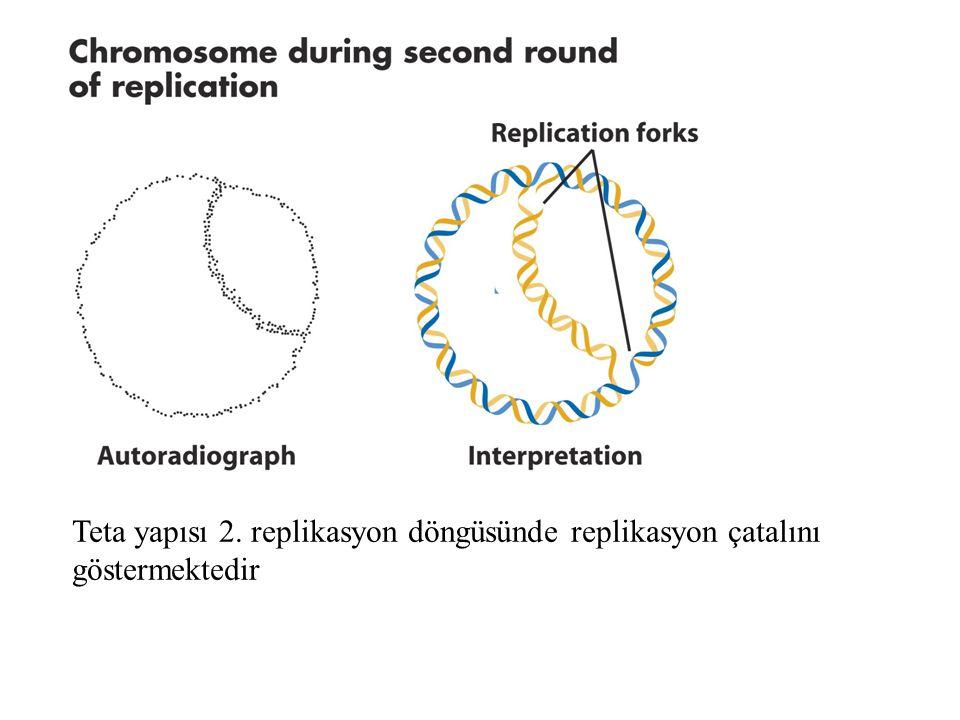 DNA polimerazlar 1959 arthur kornber DNA polimerazı izole etti Enzim dNTPleri büyüyen tek zincirli DNA'nın 3' ucuna atasal zinciri kalıp olarak kullanarak eklemektedir.
