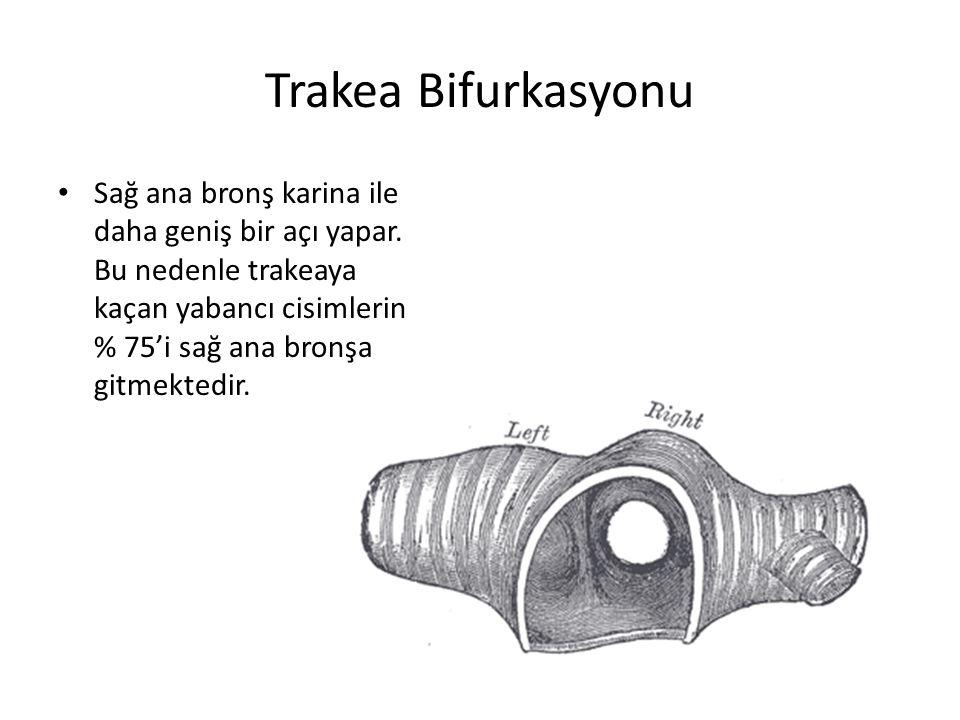Trakea Bifurkasyonu Sağ ana bronş karina ile daha geniş bir açı yapar. Bu nedenle trakeaya kaçan yabancı cisimlerin % 75'i sağ ana bronşa gitmektedir.