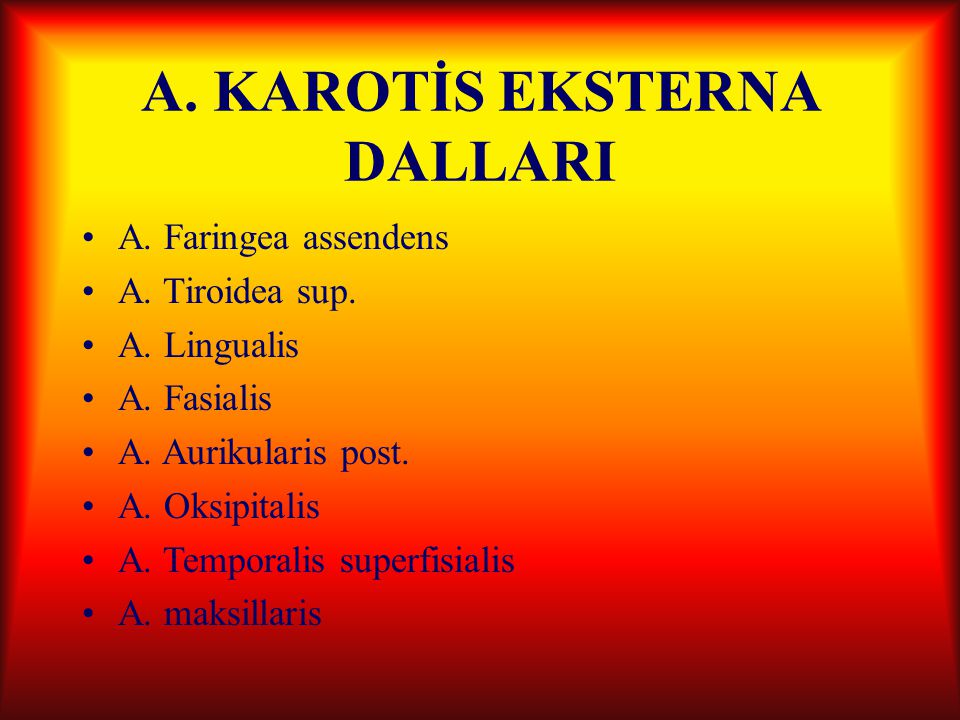 A.KAROTİS EKSTERNA DALLARI A. Faringea assendens A.