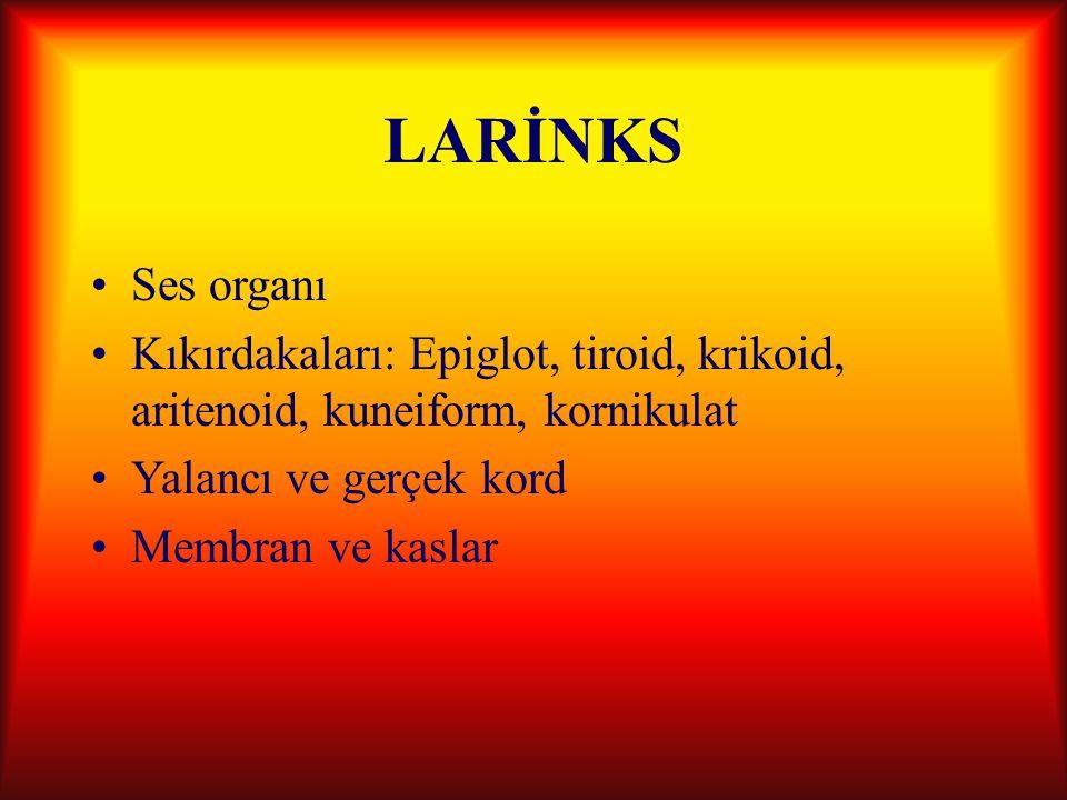 LARİNKS Ses organı Kıkırdakaları: Epiglot, tiroid, krikoid, aritenoid, kuneiform, kornikulat Yalancı ve gerçek kord Membran ve kaslar