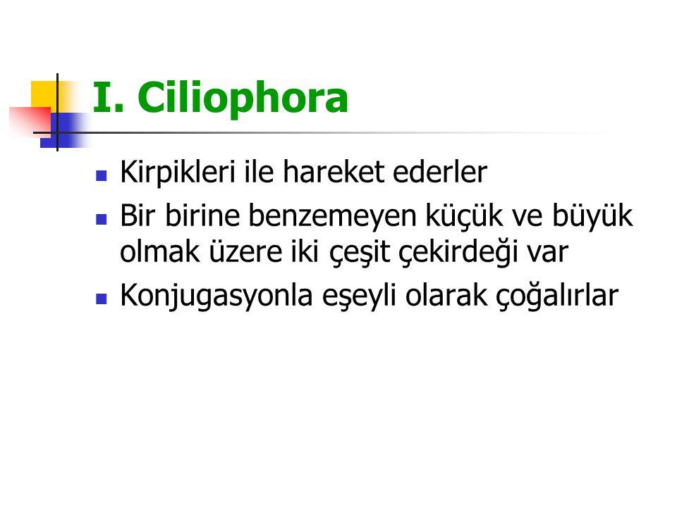 I. Ciliophora Kirpikleri ile hareket ederler Bir birine benzemeyen küçük ve büyük olmak üzere iki çeşit çekirdeği var Konjugasyonla eşeyli olarak çoğa