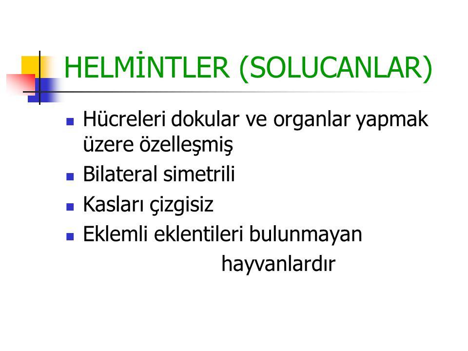 HELMİNTLER (SOLUCANLAR) Hücreleri dokular ve organlar yapmak üzere özelleşmiş Bilateral simetrili Kasları çizgisiz Eklemli eklentileri bulunmayan hayv