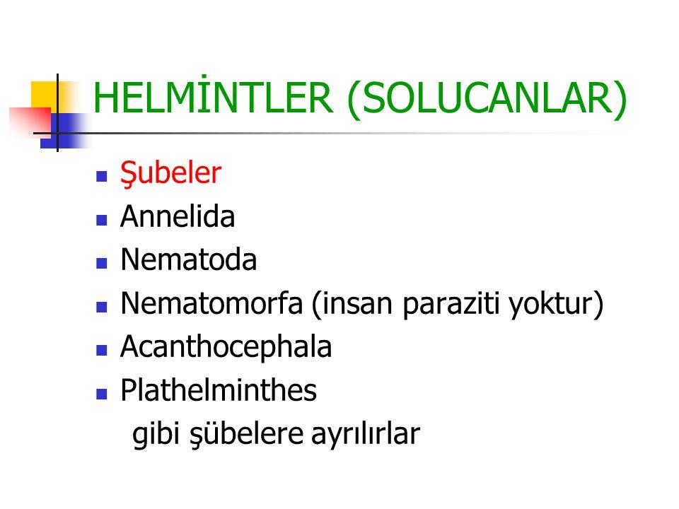 HELMİNTLER (SOLUCANLAR) Şubeler Annelida Nematoda Nematomorfa (insan paraziti yoktur) Acanthocephala Plathelminthes gibi şübelere ayrılırlar