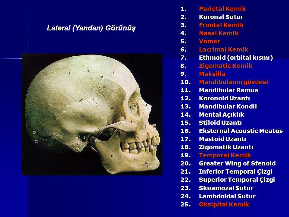 1. Parietal Kemik 2. Koronal Sutur 3. Frontal Kemik 4. Nasal Kemik 5.Vomer 6. Lacrimal Kemik 7. Ethmoid (orbital kısmı) 8. Zigomatic Kemik 9.Maksilla