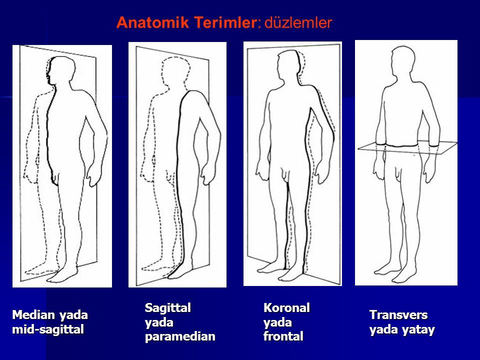 Median yada mid-sagittal Sagittal yada paramedian Koronal yada frontal Transvers yada yatay Anatomik Terimler: düzlemler