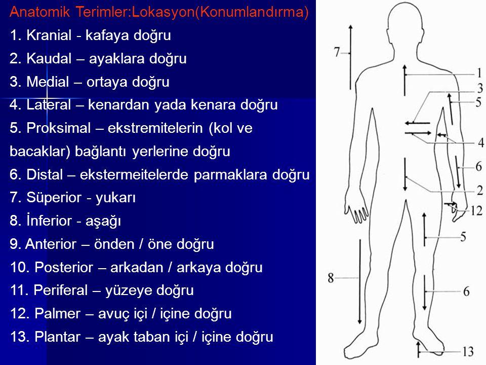 Anatomik Terimler:Lokasyon(Konumlandırma) 1. Kranial - kafaya doğru 2. Kaudal – ayaklara doğru 3. Medial – ortaya doğru 4. Lateral – kenardan yada ken