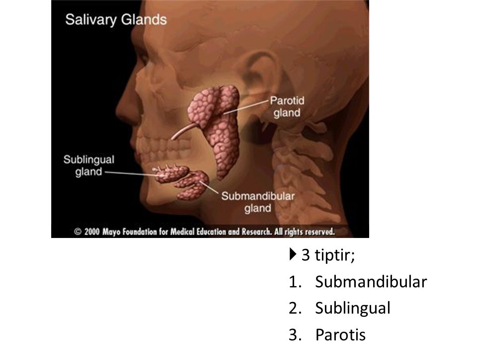  3 tiptir; 1.Submandibular 2.Sublingual 3.Parotis