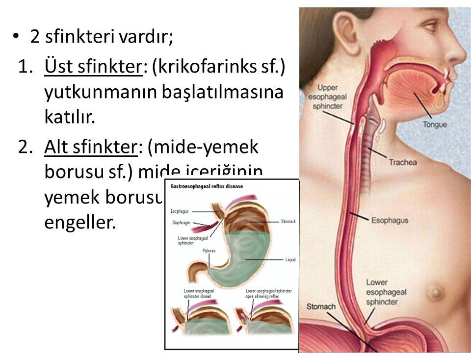 2 sfinkteri vardır; 1.Üst sfinkter: (krikofarinks sf.) yutkunmanın başlatılmasına katılır. 2.Alt sfinkter: (mide-yemek borusu sf.) mide içeriğinin yem