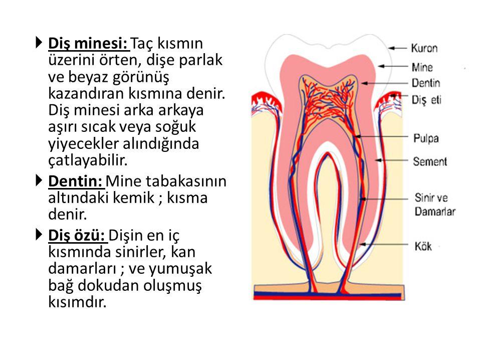  Diş minesi: Taç kısmın üzerini örten, dişe parlak ve beyaz görünüş kazandıran kısmına denir. Diş minesi arka arkaya aşırı sıcak veya soğuk yiyecekle