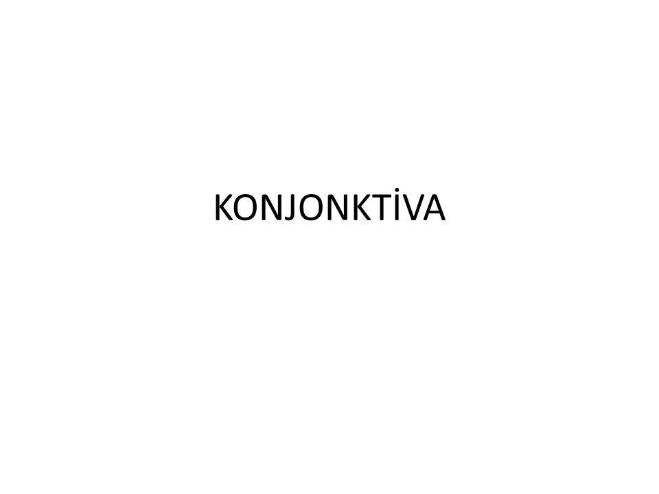 KONJONKTİVA
