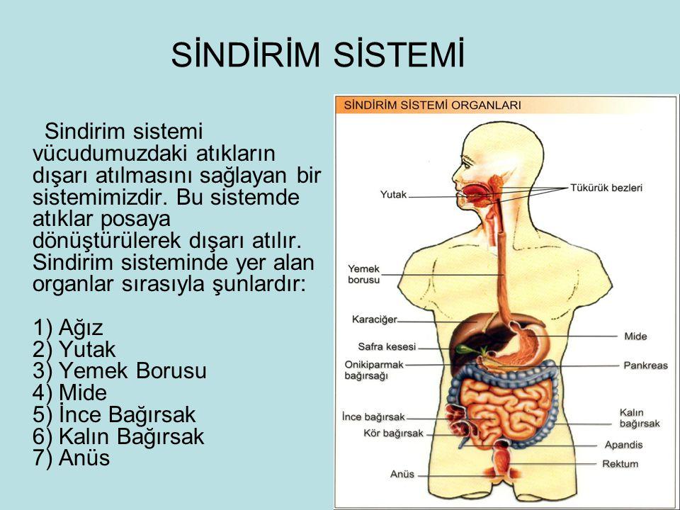 SİNDİRİM SİSTEMİ Sindirim sistemi vücudumuzdaki atıkların dışarı atılmasını sağlayan bir sistemimizdir. Bu sistemde atıklar posaya dönüştürülerek dışa