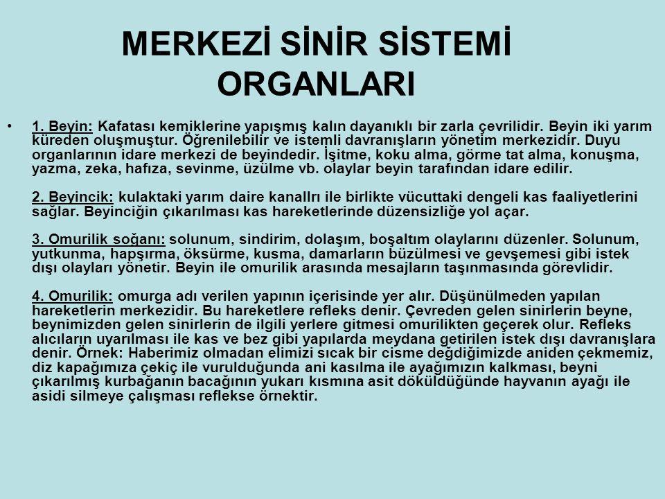 MERKEZİ SİNİR SİSTEMİ ORGANLARI 1.
