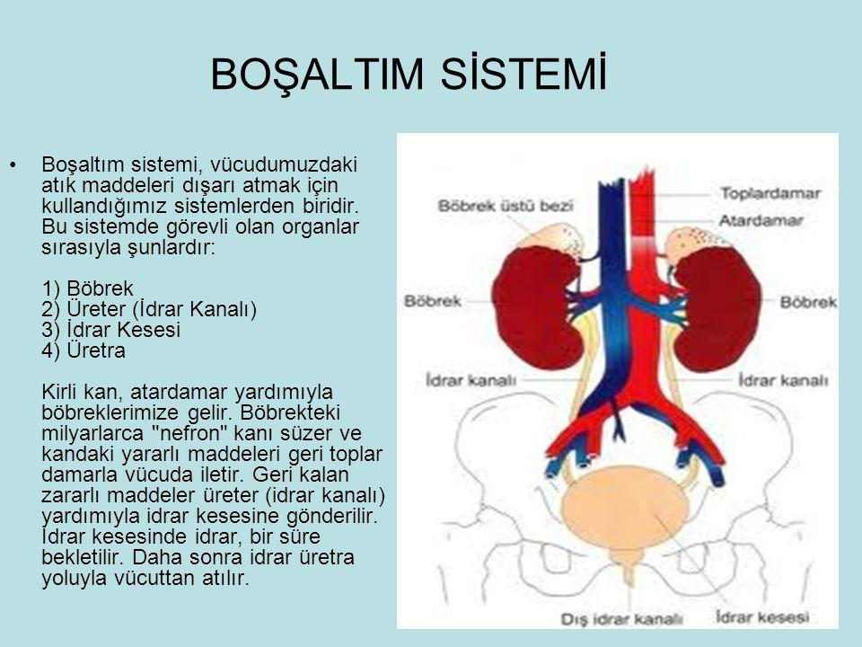 BOŞALTIM SİSTEMİ Boşaltım sistemi, vücudumuzdaki atık maddeleri dışarı atmak için kullandığımız sistemlerden biridir. Bu sistemde görevli olan organla