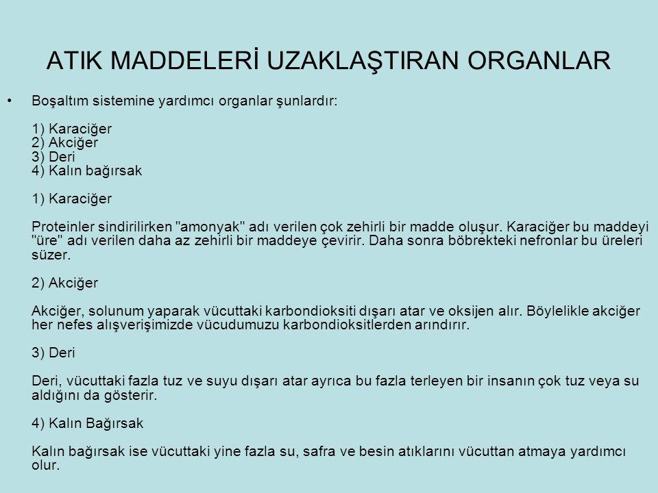 ATIK MADDELERİ UZAKLAŞTIRAN ORGANLAR Boşaltım sistemine yardımcı organlar şunlardır: 1) Karaciğer 2) Akciğer 3) Deri 4) Kalın bağırsak 1) Karaciğer Pr