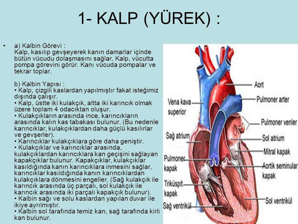 1- KALP (YÜREK) : a) Kalbin Görevi : Kalp, kasılıp gevşeyerek kanın damarlar içinde bütün vücudu dolaşmasını sağlar. Kalp, vücutta pompa görevini görü
