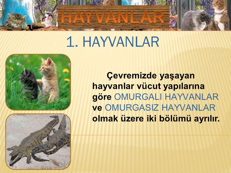 1. HAYVANLAR Çevremizde yaşayan hayvanlar vücut yapılarına göre OMURGALI HAYVANLAR ve OMURGASIZ HAYVANLAR olmak üzere iki bölümü ayrılır.
