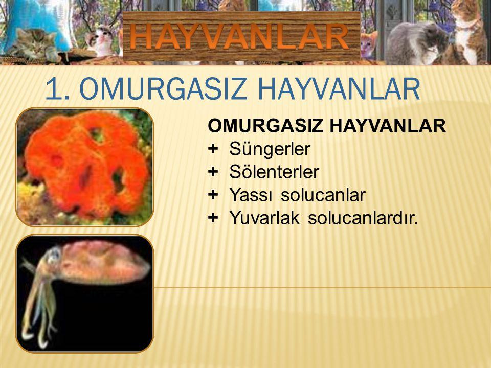 1. OMURGASIZ HAYVANLAR OMURGASIZ HAYVANLAR + Süngerler + Sölenterler + Yassı solucanlar + Yuvarlak solucanlardır.