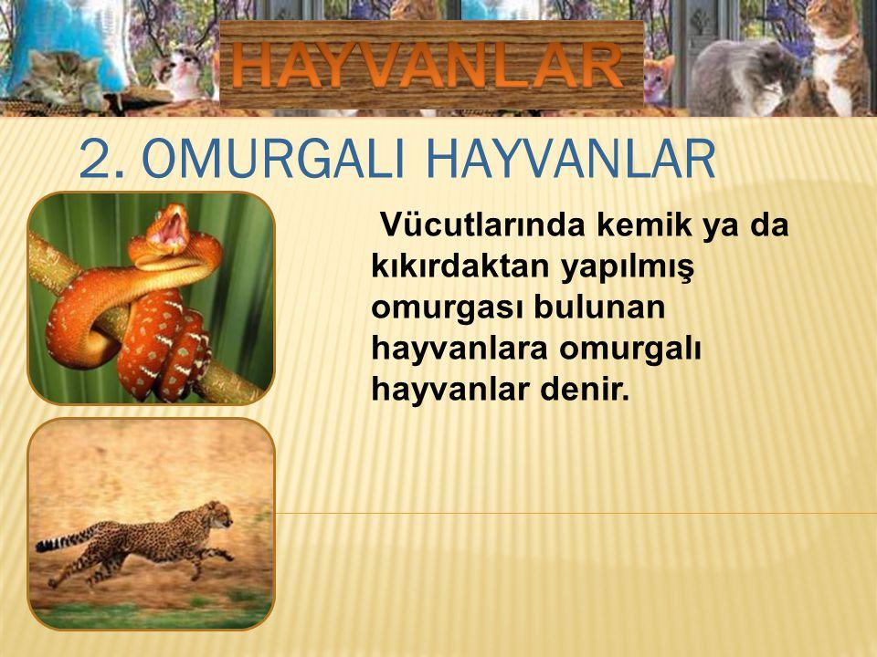2. OMURGALI HAYVANLAR Vücutlarında kemik ya da kıkırdaktan yapılmış omurgası bulunan hayvanlara omurgalı hayvanlar denir.