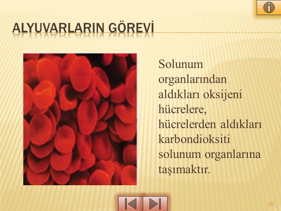 Solunum organlarından aldıkları oksijeni hücrelere, hücrelerden aldıkları karbondioksiti solunum organlarına taşımaktır. 26