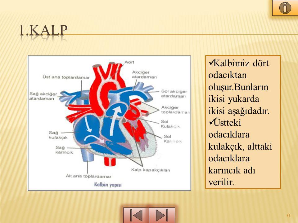 6 Kalbimiz dört odacıktan oluşur.Bunların ikisi yukarda ikisi aşağıdadır.