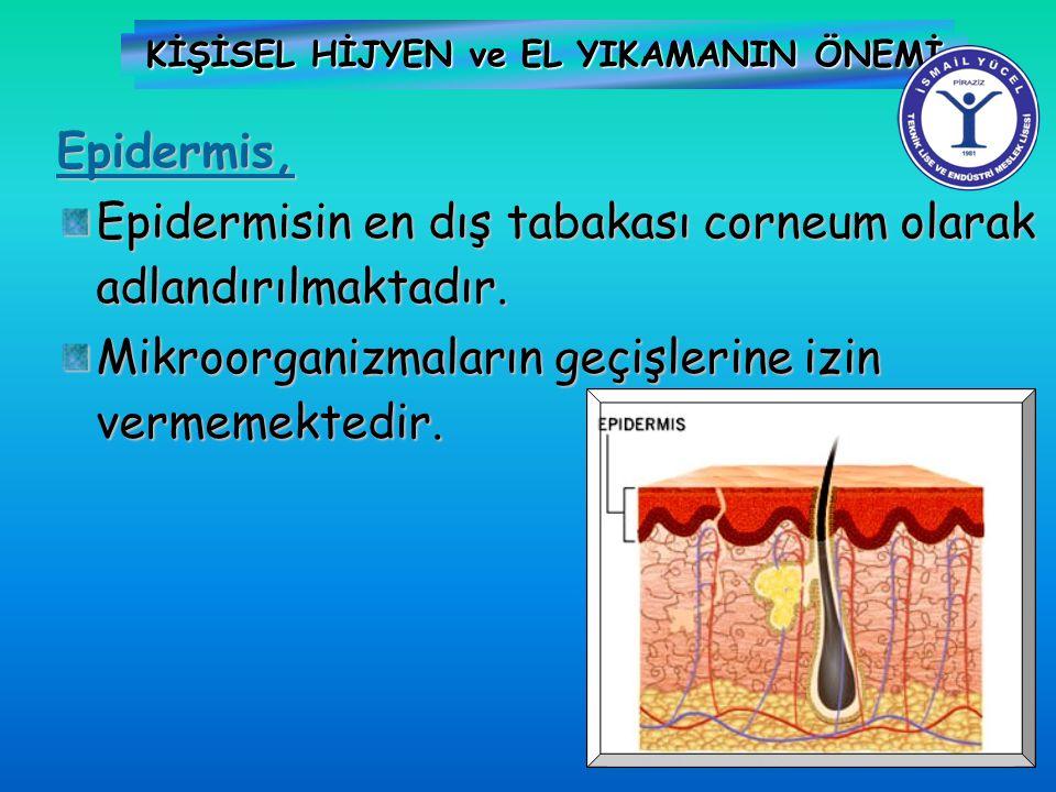 KİŞİSEL HİJYEN ve EL YIKAMANIN ÖNEMİ Epidermis, Epidermisin en dış tabakası corneum olarak adlandırılmaktadır. Mikroorganizmaların geçişlerine izin ve