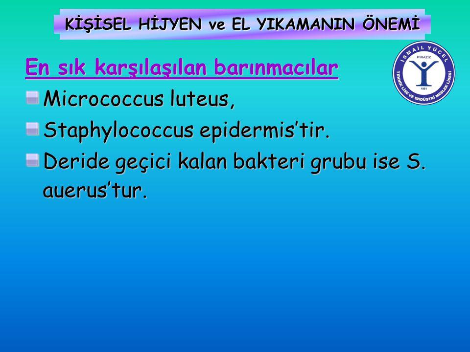 KİŞİSEL HİJYEN ve EL YIKAMANIN ÖNEMİ En sık karşılaşılan barınmacılar Micrococcus luteus, Staphylococcus epidermis'tir. Deride geçici kalan bakteri gr